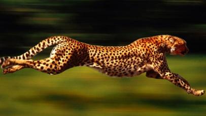 Tips για την μέγιστη ταχύτητα στο Prestashop
