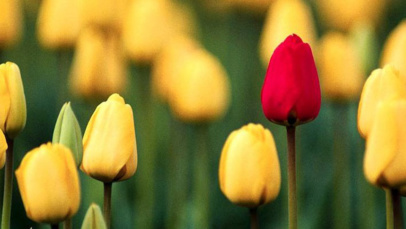 Brand & Internet Marketing